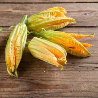 Blüten Zucchini