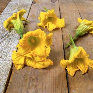Blüten Kürbis