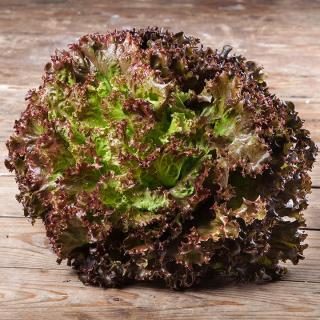Salat Batavia rot