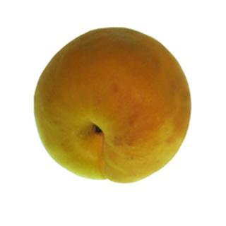 Aprikosen Orange Ruby  ´40+