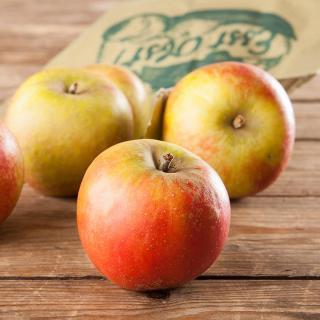 Apfel Wellant