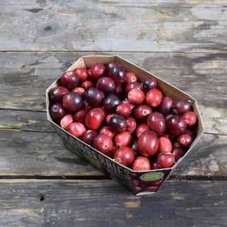 Cranberries frisch
