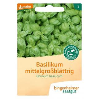 Basilikum mittelgroß Ocimum b