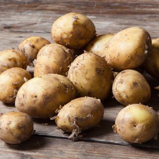 Frühkartoffeln Rosara vfk