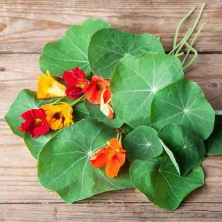 Kapuzinerkresse Blatt+Blüten