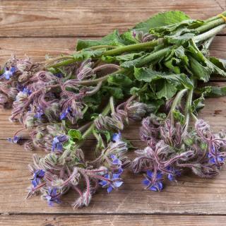 Kräuterstrauß mit Blüten