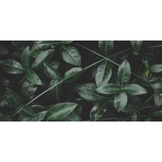 Pflanzen, Erde und Saatgut